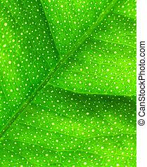 Lime Leaf Macro