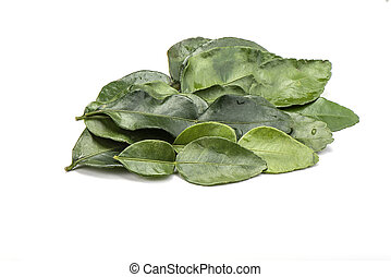 Lime leaves with drops