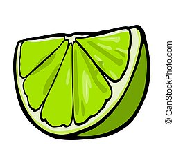 Lime slice. Color vector illustration isolated on white