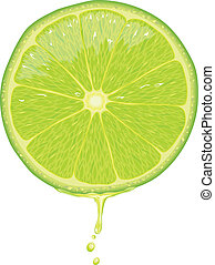 Lime Slice - Vector - Illustration of a lime slice with...