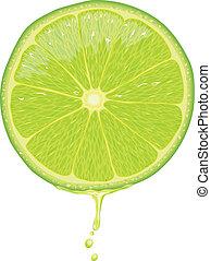 Lime Slice - Vector