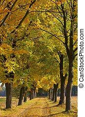 lime tree avenue 06