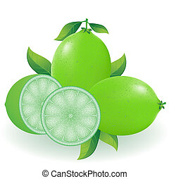 lime vector illustration