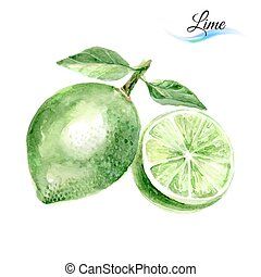 Lime - Watercolor fruit lime isolated on white background