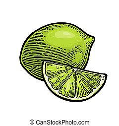 Lime whole and slice. Vintage vector engraving illustration