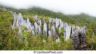 Limestone pinnacles at gunung mulu national park - limestone...