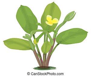 Limnocharis flava plant on white background vector design