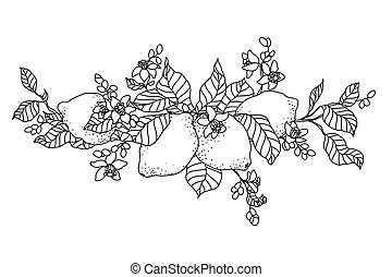 limone, branch., albero, image., stile, poco, fiori, ...