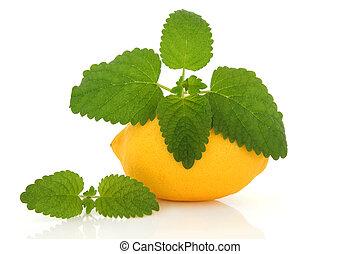 limone, frutta, e, balsamo limone, erba