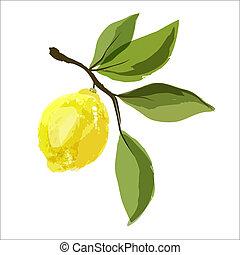 limone, leaves., ramo