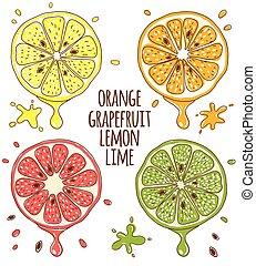 limone, slices., calce, pompelmo, frutte, arancia, fresco