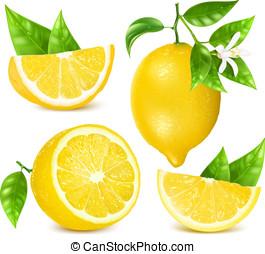 limones frescos, con, hojas, y, blossom.