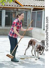 limpieza, perrera, ayudante, tiempo