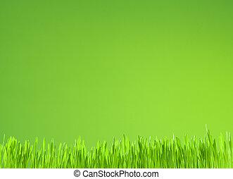 limpio, fresco, pasto o césped, crecimiento, en, fondo verde