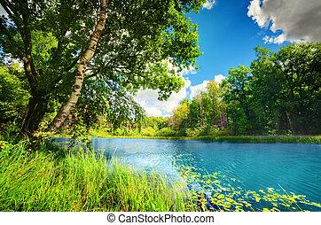 limpio, lago, en, verde, primavera, verano, bosque