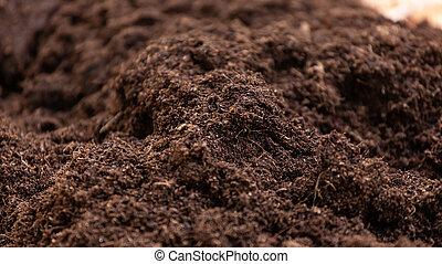 limpio, tierra, plantar en una maceta, cultivation.