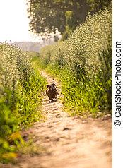lincolnshire, caminata, campo