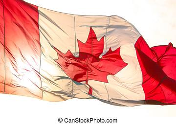linda, flagga, kanadensare, vinka, bakbelyst