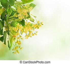linden, árvore, flores, borda