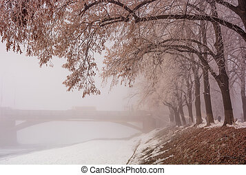 linden alley on winter foggy morning - longest in Europe...