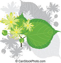 linden, fiori, con, fogliame