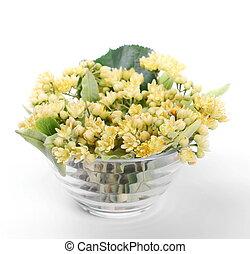 linden flower in glass bowl