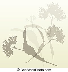 Linden flowers vintage background vector abstract
