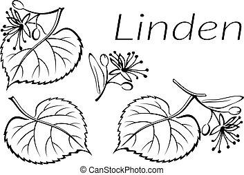 Linden Leaves Pictogram Set