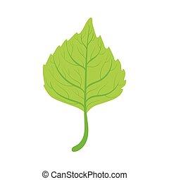 Linden tree green leaf vector Illustration