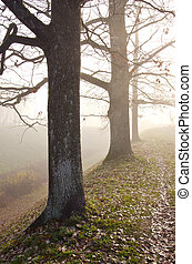 Linden tree trunks sunk in fog. Autumn trees in alley.