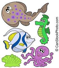 lindo, 3, animales, colección, marina