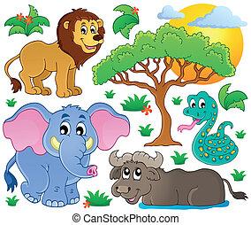 lindo, africano, animales, colección, 2