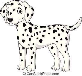 lindo, aislado, perro, plano de fondo, blanco, dálmata,...