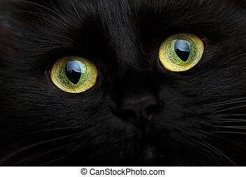 lindo, bozal, de, un, gato negro, cicatrizarse