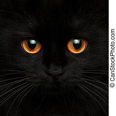 lindo, bozal, de, un, gato negro, con, ojos rojos