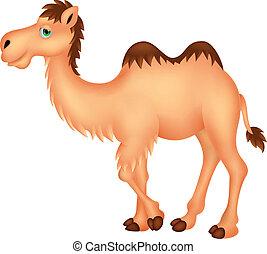 lindo, camello, caricatura