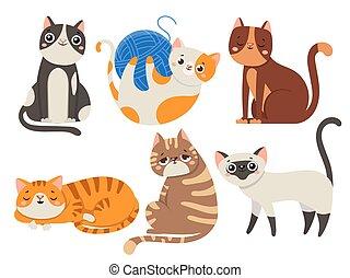 lindo, cats., velloso, gato, sentado, gatito, carácter, o, animales domésticos, aislado, vector, ilustración, colección