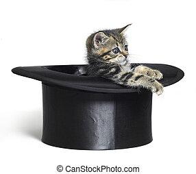 lindo, cima, negro, gatito, sombrero, juego