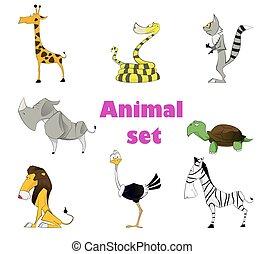 lindo, conjunto, animal