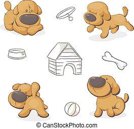 lindo, conjunto, perros, teddy