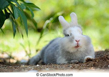 lindo, divertido, conejo, aire libre, acostado, suelo