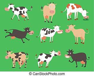 lindo, doméstico, colores, vacas, leche, diferente, posturas...