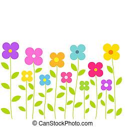 lindo, flores coloridas
