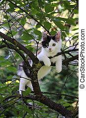 lindo, gatito, rama de árbol, descansar