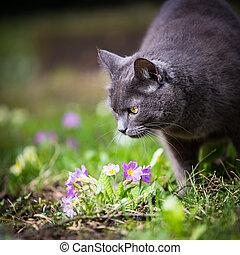 lindo, gato de kitty, aire libre, en, un, césped verde