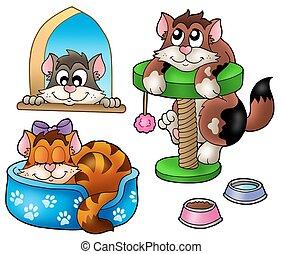 lindo, gatos, colección