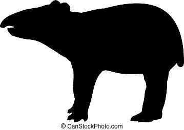 lindo, joven, silueta, poco, tapir., animal