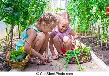 lindo, niñas, cosecha, recoger, pepinos, invernadero