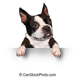 lindo, perro, tenencia, un, muestra en blanco