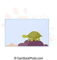 lindo, poco, carapace., terrarium., animal, turtoise